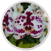 Portrait Of An Orchid Round Beach Towel