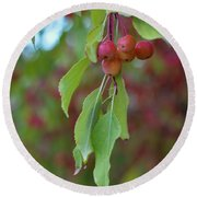 Pretty Cherries Hanging From Tree Round Beach Towel
