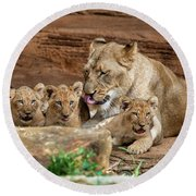 Pride Of The Pride 6114 Round Beach Towel by Donald Brown
