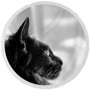Profile Of A Long Haired Cat In Window Round Beach Towel