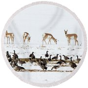 Pronghorn Antelope And Geese Round Beach Towel