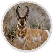 Pronghorn In The Sage Round Beach Towel