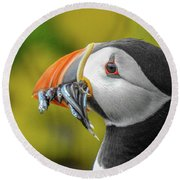Puffin With A Mouthful Round Beach Towel