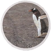 Quick Hurry - Gentoo Penguin By Alan M Hunt Round Beach Towel by Alan M Hunt