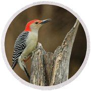 Red-belly At Stump Round Beach Towel