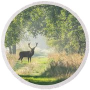 Red Deer In The Forest Round Beach Towel