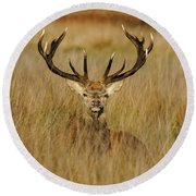 Red Deer Portrait 2 Round Beach Towel