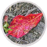 Red Leaf On Green's Hill Round Beach Towel