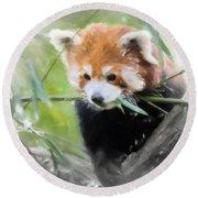 Red Panda Round Beach Towel by Chris Armytage