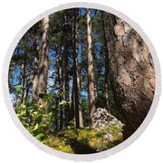 Red Pine Itasca Round Beach Towel