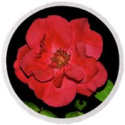 Red Rose With Dewdrops 038 Round Beach Towel