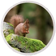 Red Squirrel Sciurus Vulgaris Eating A Seed On A Stone Wall Round Beach Towel