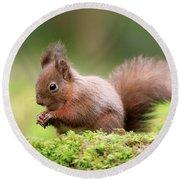 Red Squirrel Sciurus Vulgaris Round Beach Towel