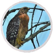 Red Shouldered Hawk Panorama Round Beach Towel