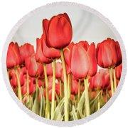 Red Tulip Field In Portrait Format. Round Beach Towel