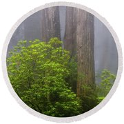 Redwoods By Crescent City 7 Round Beach Towel