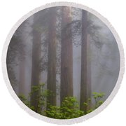 Redwoods By Crescent City 8 Round Beach Towel