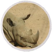 Resting Rhinoceros With His Head Down In A Sandy Area Round Beach Towel