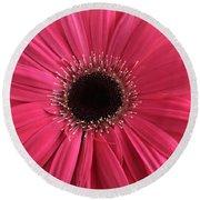 Rhapsody In Pink - Gerbera Daisy Round Beach Towel