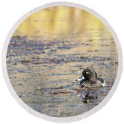 Ring Necked Duck Round Beach Towel by Michael Chatt