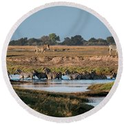 River-crossing Zebras Round Beach Towel