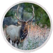 Rocky Mountain Wildlife Bull Elk Sunrise Round Beach Towel by Nathan Bush