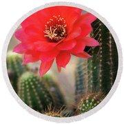 Rose Quartz Cactus Flower  Round Beach Towel