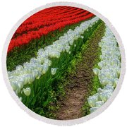 Rows Of White And Red Tulips Round Beach Towel
