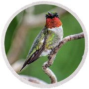 Ruby-throated Hummingbird In All His Glory Round Beach Towel