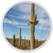 Saguaro Evening Sentry Round Beach Towel by Lon Dittrick