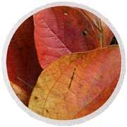Sassafras Autumn Round Beach Towel