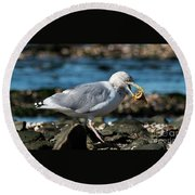 Seagull Carrying Snail Round Beach Towel