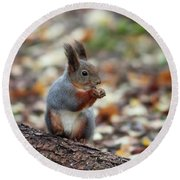 Shadow Boxing. Red Squirrel Round Beach Towel