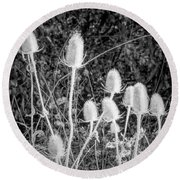 Silver Thistle Seed Pods Round Beach Towel
