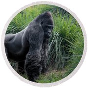 Silverback Stare 1806 Round Beach Towel by Donald Brown
