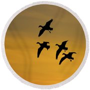 Snow Geese Landing At Sunset Round Beach Towel