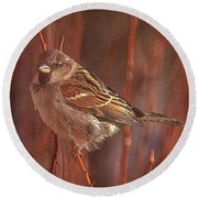Sparrow In The Sunshine Round Beach Towel