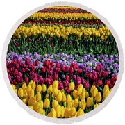Spectacular Rows Of Colorful Tulips Round Beach Towel