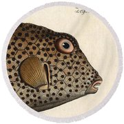 Spotted Trunk Fish  Round Beach Towel