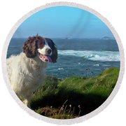 Springer Spaniel Dog In Sennen Cove Round Beach Towel
