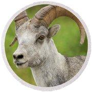 Stone's Sheep Ram Portrait Round Beach Towel