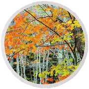 Sugar Maple Acer Saccharum In Autumn Round Beach Towel
