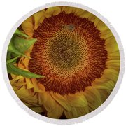 Sunflower Splendor Round Beach Towel by Judy Hall-Folde