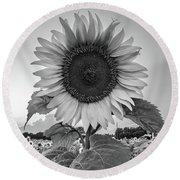 Sunflowers 10 Round Beach Towel