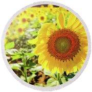 Sunflowers Round Beach Towel by Robert Bellomy