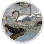 Swan Family Outting  Round Beach Towel