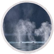 Synchronized Swimming Humpback Whales Alaska Round Beach Towel by Nathan Bush