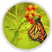 The Monarch Butterfly Round Beach Towel