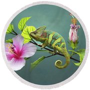 The Veiled Chameleon Of Florida Round Beach Towel