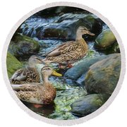 Three Mallard Ducks Swimming In A Stone Filled Brook. Round Beach Towel